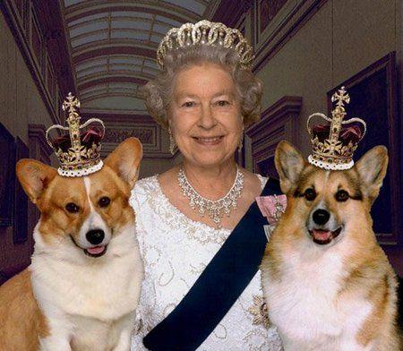 королевские корги